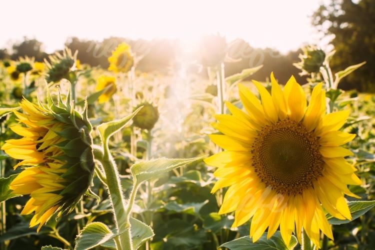 Poľnohospodársky pozemok na účely zákona č. 140/2014 Z.z. o o nadobúdaní vlastníctva poľnohospodárskeho pozemku a o zmene a doplnení niektorých zákonov